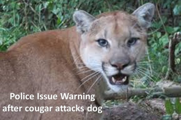 Police issue warning after cougar attacks dog in Port Moody