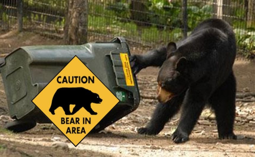Oh no… there's a bear in my backyard!