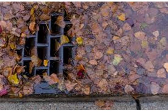 Please help to clear storm sewer catch basins of leaves and debris
